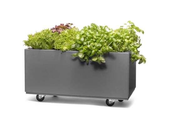 Grå blomsterkasse med hjul med beplantet kryddplanter