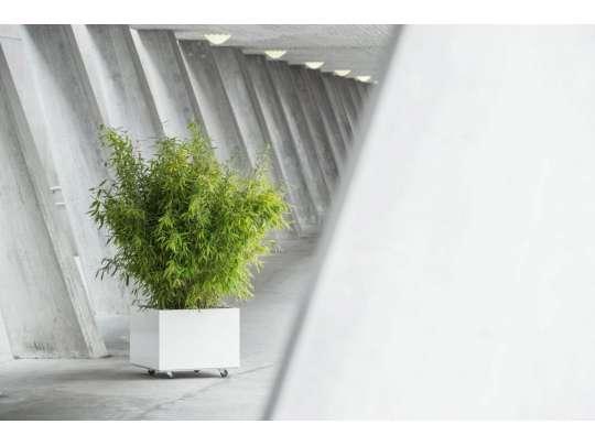 Hvit plantekasse med hjul, beplantet med bambus