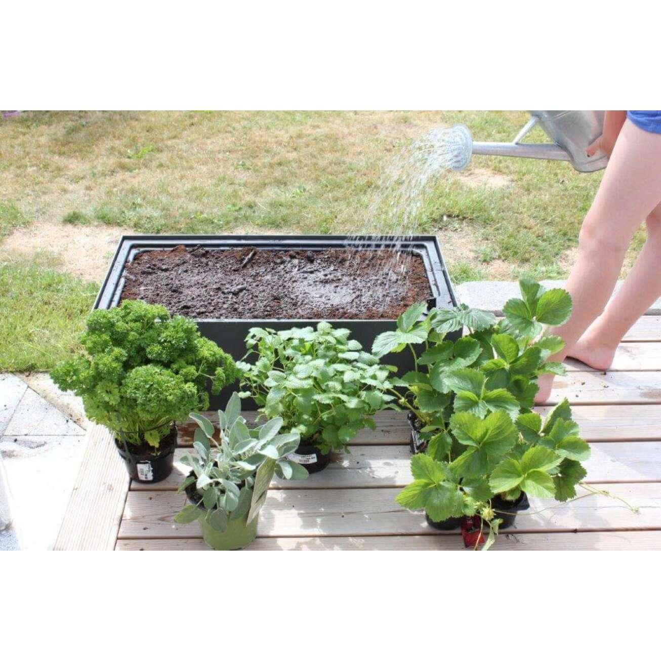 Fem potter med forskjellige krydder og planter og en dame som vanner jord i plantekasse
