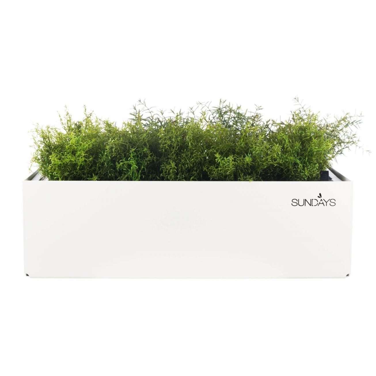 Sundays Frame Planter - selvvannende urtepotte - hvit med grønne krydderurter