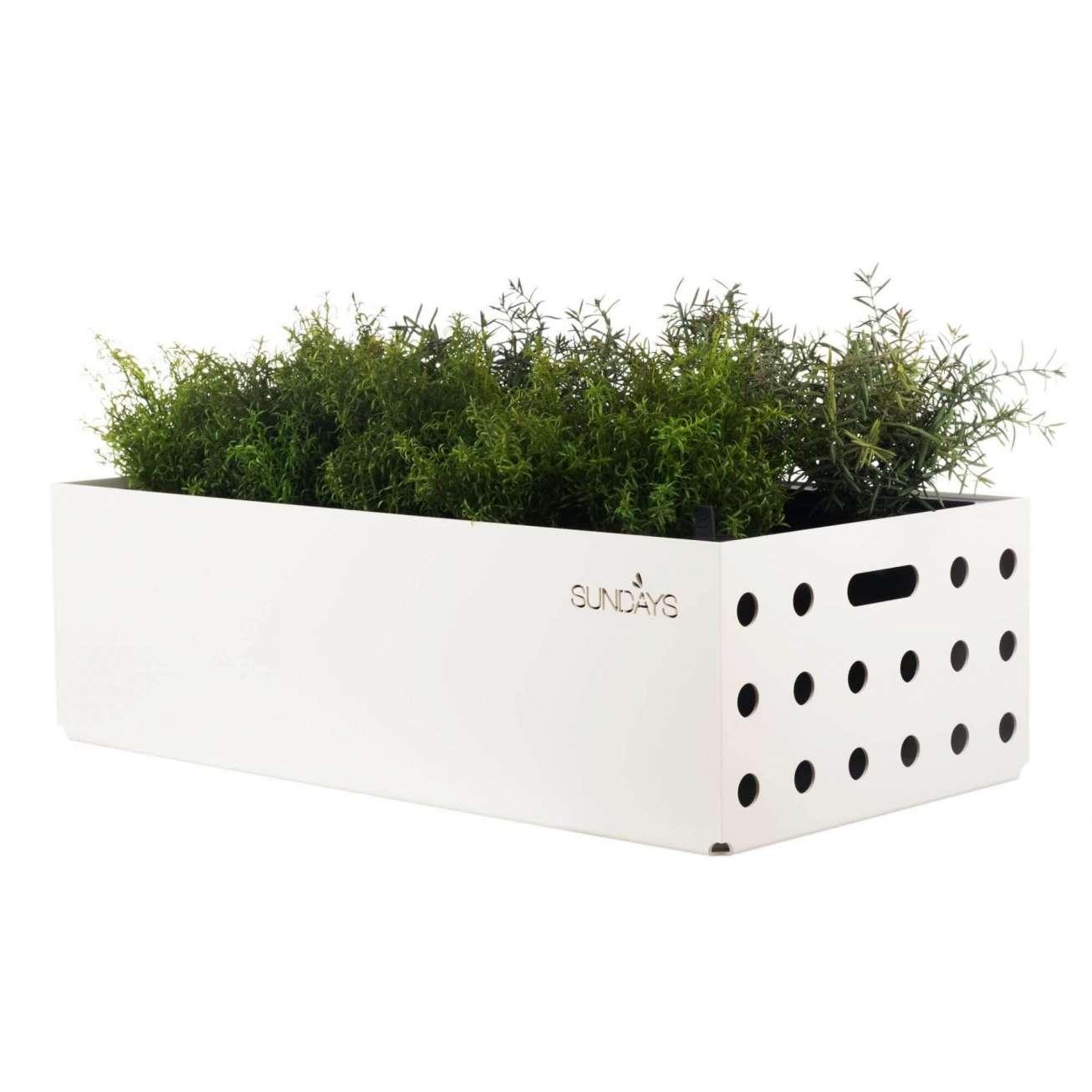 Sundays selvvannende urtepotte i hvit med grønne krydderurter