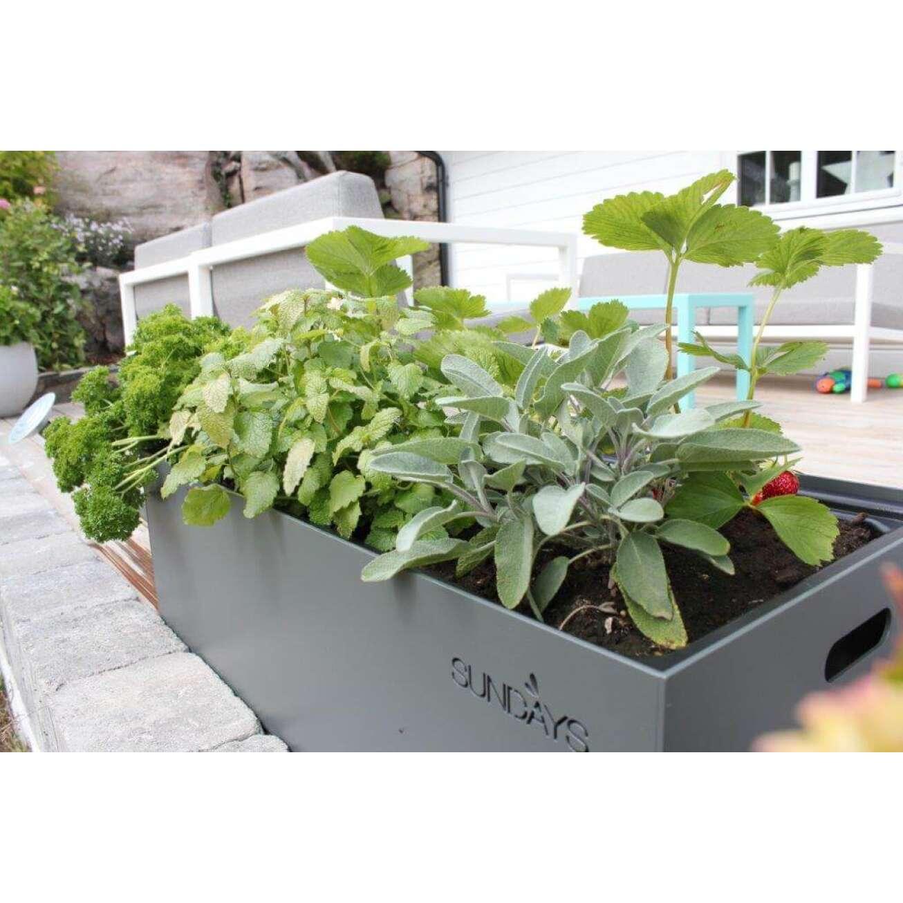 Sundays Frame Planter - selvvannende utepotte i grå med grønne krydderplanter