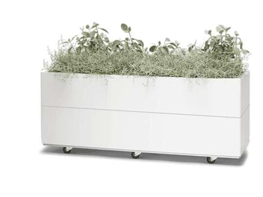 Grønne planter i Bedd plantekasse i hvit galfan med bunn og hjul