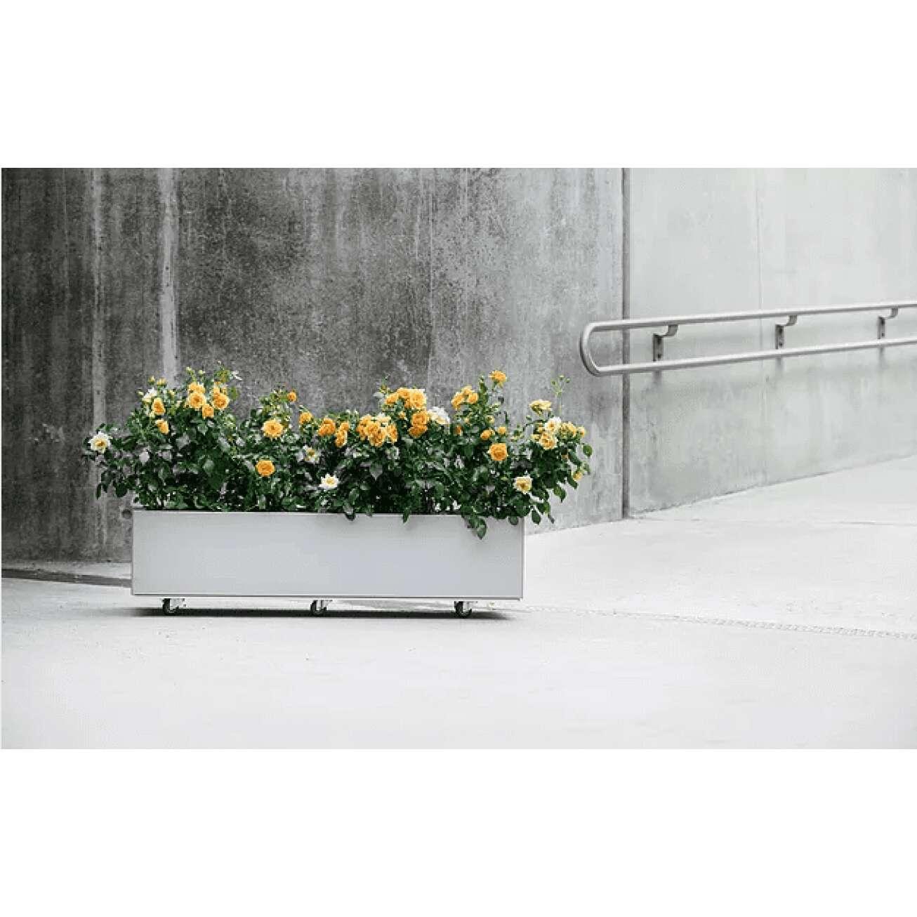Bedd plantekasse i galfan med bunn og hjul med blomsterplanter