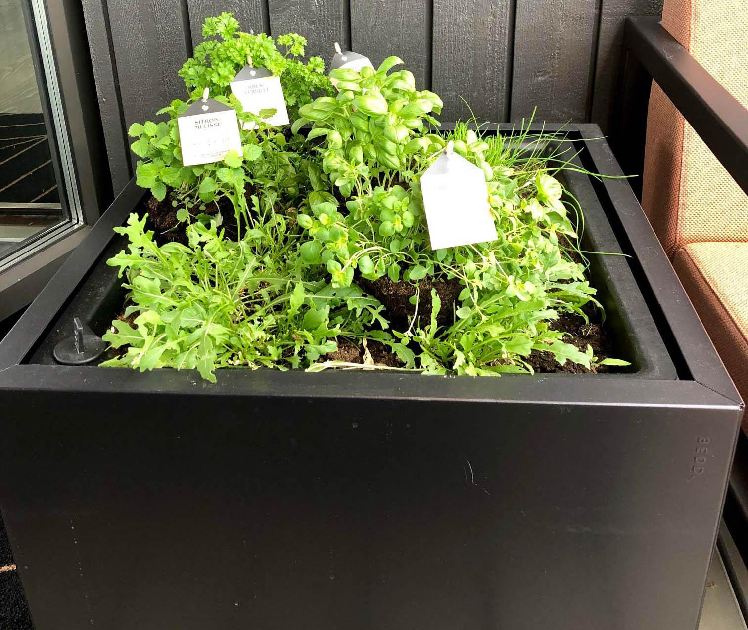 Grønne, frodige krydderurter i plantekasse fra BEDD