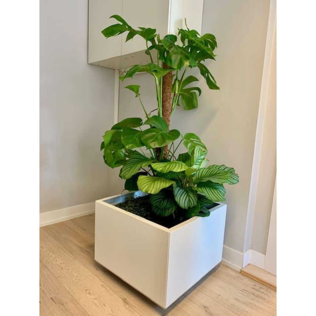 Grønne inneplanter i Bedd plantekasse i hvit med bunn og hjul